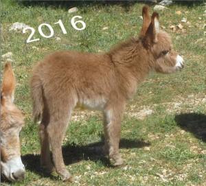 nursery 2016