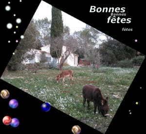 news Bonnes fêtes